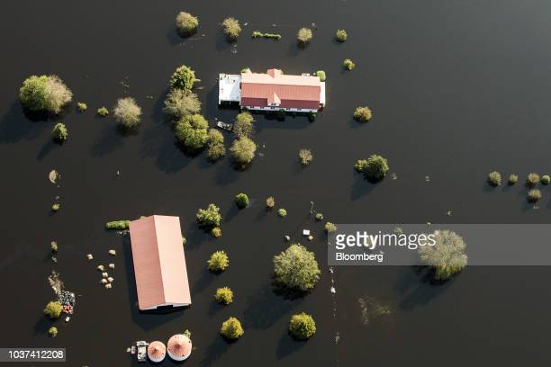 A hog farm surround by floodwater is seen in this aerial photograph taken above New Bern North Carolina US on Friday Sept 21 2018 Record floods cover...