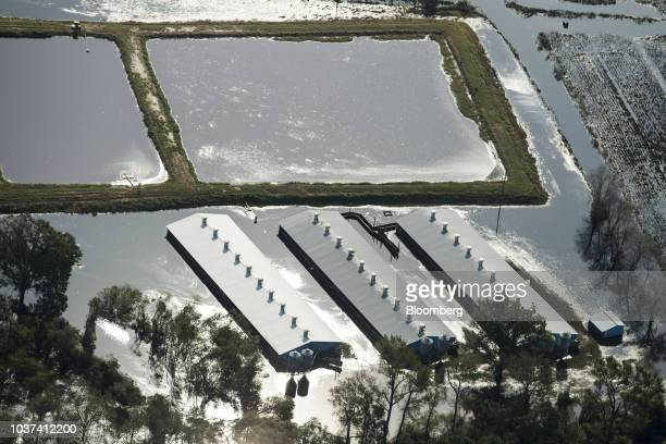 A hog farm surrounded by floodwater is seen in this aerial photograph taken above Willard North Carolina US on Friday Sept 21 2018 Record floods...
