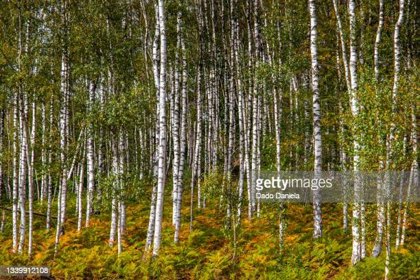 hoge kempen national park - liege stock pictures, royalty-free photos & images
