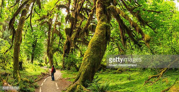 hoh rainforest - washington state stock pictures, royalty-free photos & images