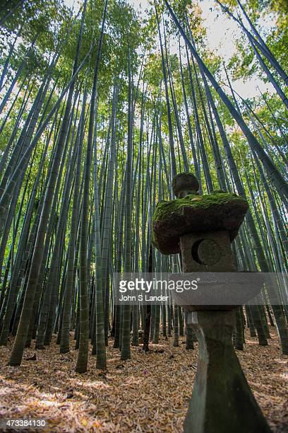 Hokokuji Bamboo Garden sometimes call the Bamboo Temple because of its large bamboo grove was once the family temple of both the Ashikaga and Uesugi...