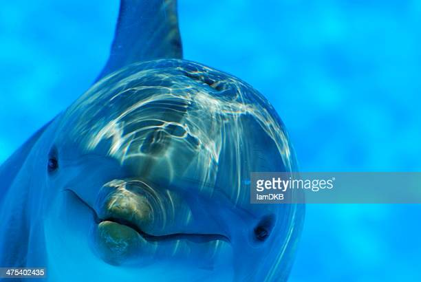 hola! - dolphin stock pictures, royalty-free photos & images