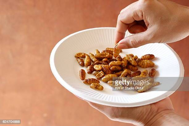 hold and pick silkworm from paper plate - insetto foto e immagini stock