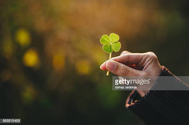 holding a four-leaf clover - clover stock photos and pictures