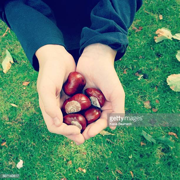 Holding a handful of chestnuts