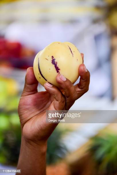 holding a peruvian pepino dulce - pepino stock pictures, royalty-free photos & images