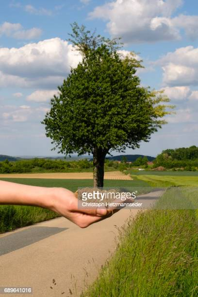 holding a tree - optical illusion stock photos and pictures