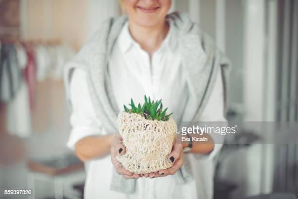 Tenant une plante d'Aloe Vera