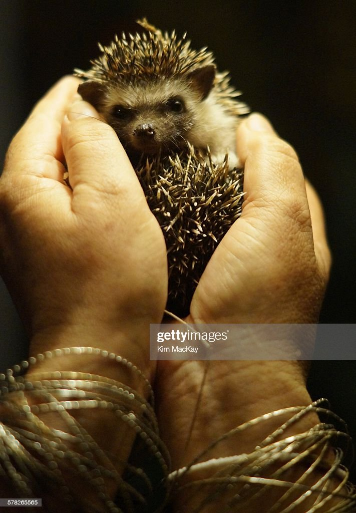 My friend in Diani Beach, Kenya often finds hedgehogs in her backyard. This little one came for a visit late one night and he couldn't have been cuter!