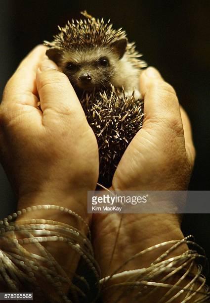 Holding Baby Hedgehog