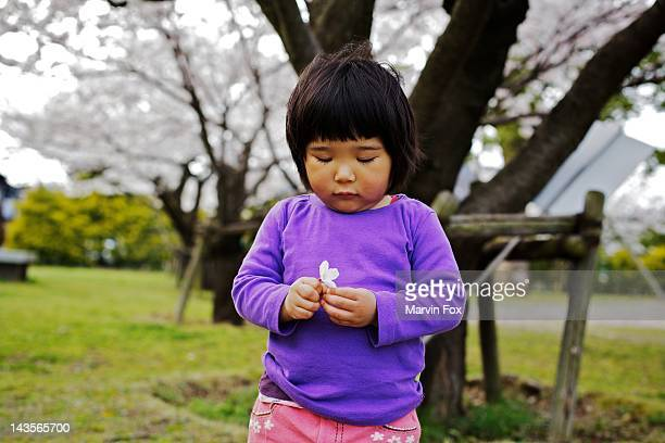 holding cherry blossom - yonago stock photos and pictures