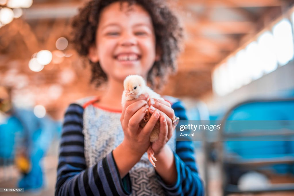 Holding chicken in her hands : Stock Photo