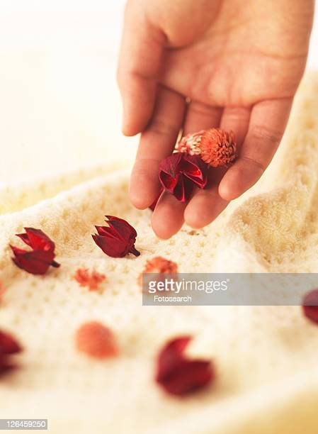 Holding Dried Flower