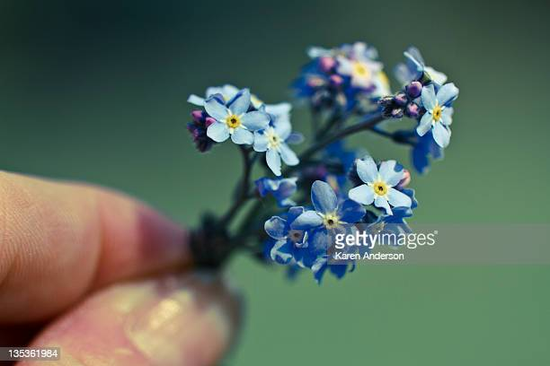 Holding Forget-me-nots