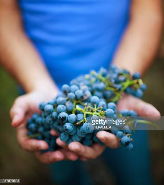 holding ripe grapes