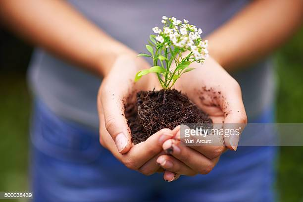 holding the future in her hands - green fingers stock pictures, royalty-free photos & images