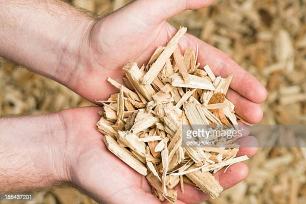 Holding Wood Chips Biomass Fuel
