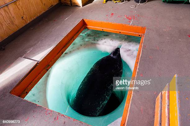 A hole through the sea ice in a research hut used by a Weddell Seal.