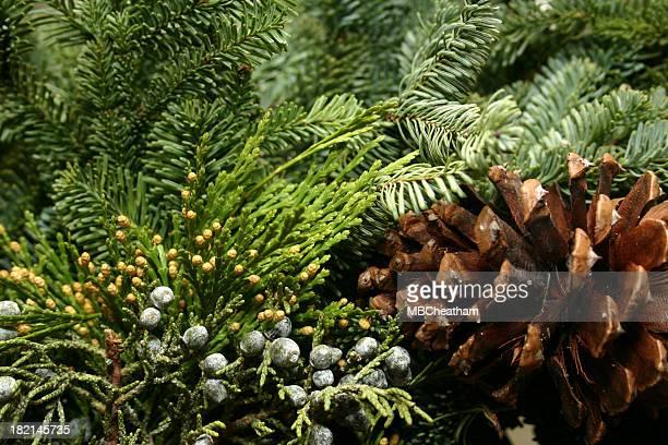 holiday greenery - twijg stockfoto's en -beelden