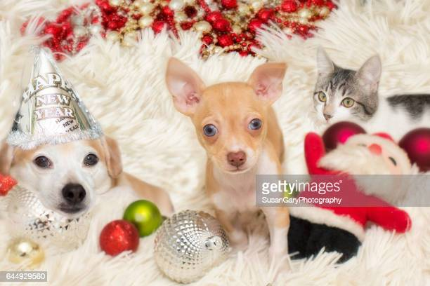 holiday pets - christmas kittens stock pictures, royalty-free photos & images