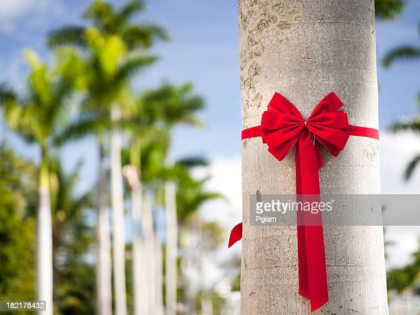holiday ribbon on a palm tree - florida christmas stock pictures, royalty-free photos & images