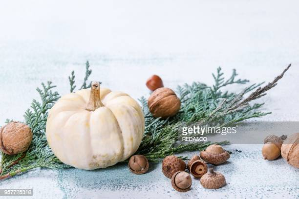Holiday table decoration with white decorative pumpkins thuja branches walnuts and acorns over white wooden background Space for text