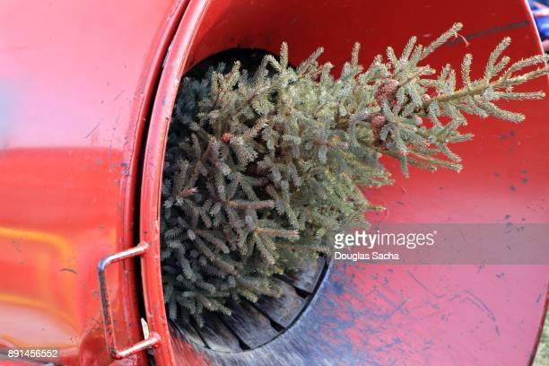 Holiday tree enters the Christmas Tree Baler
