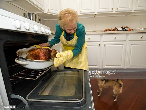 holiday turkey coming out of the oven with a dog - thanksgiving dog stock photos and pictures