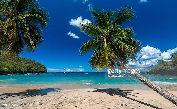 holidays! - martinique stock photos and pictures