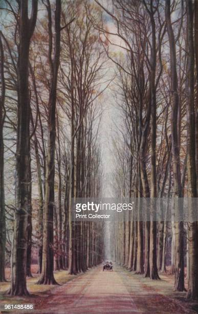 Holland. In the pleasantly wooded district around Arnhem Middachter Avenue with its giant beeches is lovely at all seasons', circa 1930s. From...