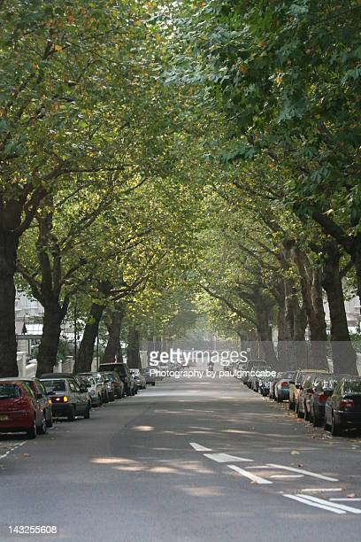 holland park street with trees and parked cars - holland park stock pictures, royalty-free photos & images