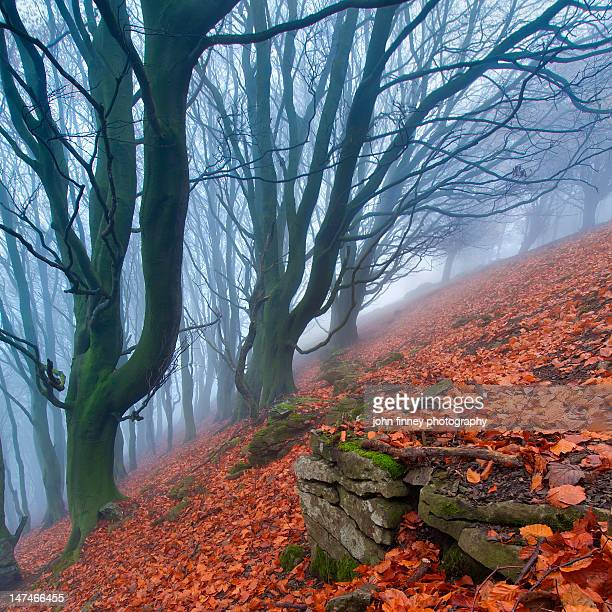 Hollow trees in mist