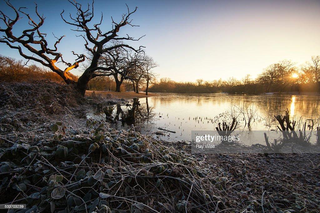 Hollows Pond - sunrise : Foto stock