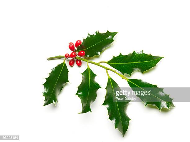 Holly and berries on white backgrounds.