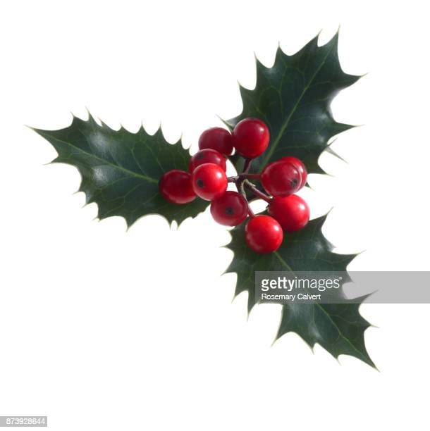 holly berries with three leaves on diagonal, on white. - christmas decoration stock pictures, royalty-free photos & images
