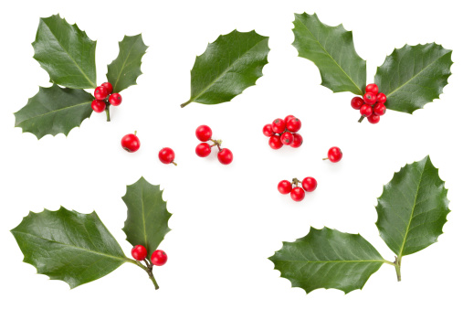 Holly leaves and berries 187483593