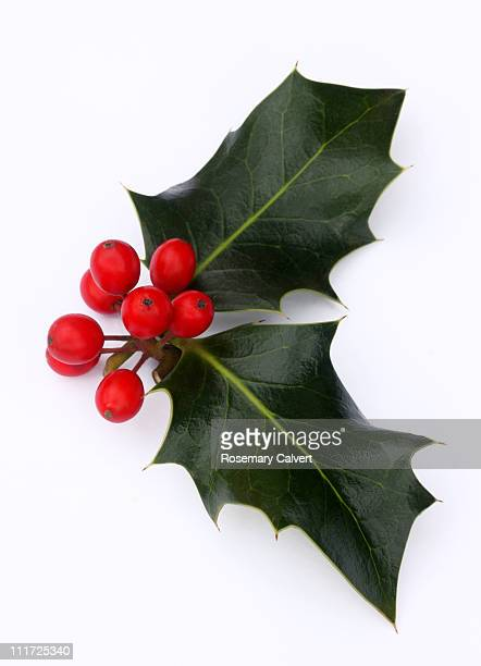 Holly leaves with a bunch of red berries.
