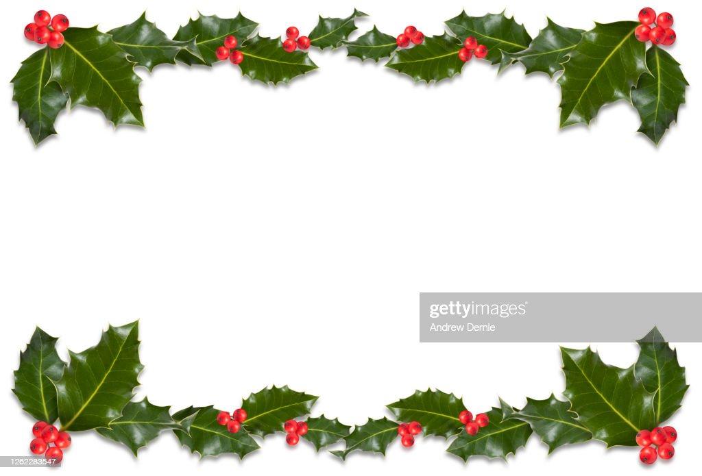 Holly : Stock Photo