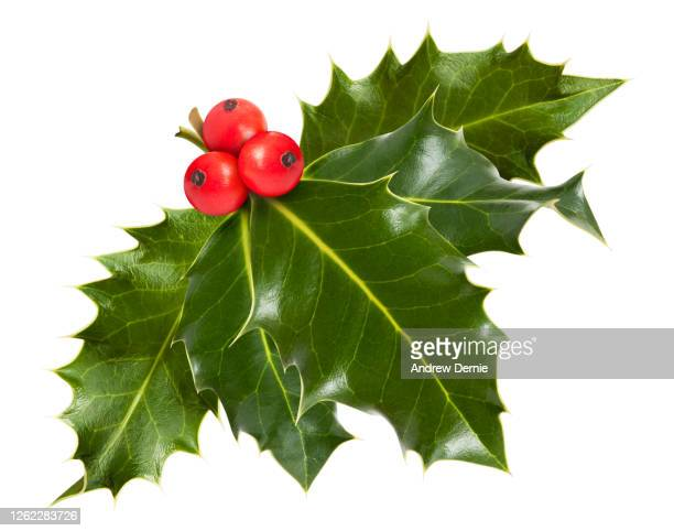 holly - andrew dernie stock pictures, royalty-free photos & images
