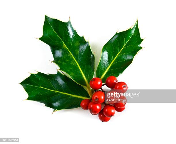 holly - holly stock pictures, royalty-free photos & images