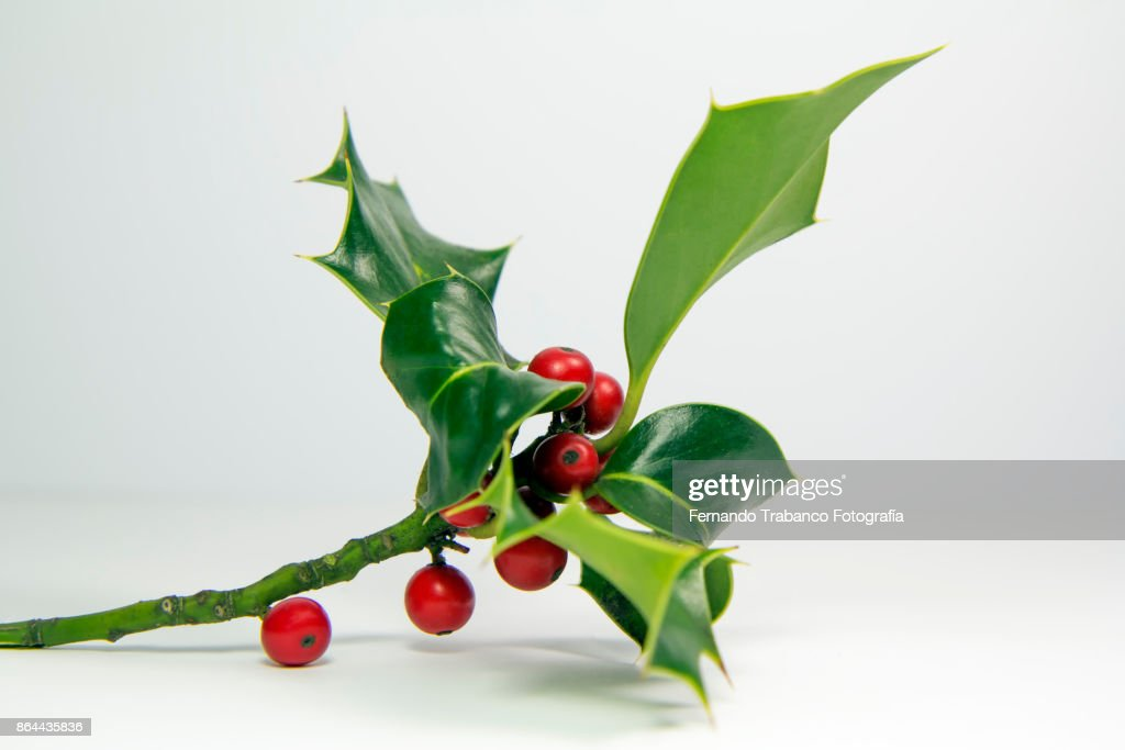 holly with fruits : Photo