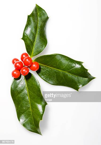 Holly with red berries on white