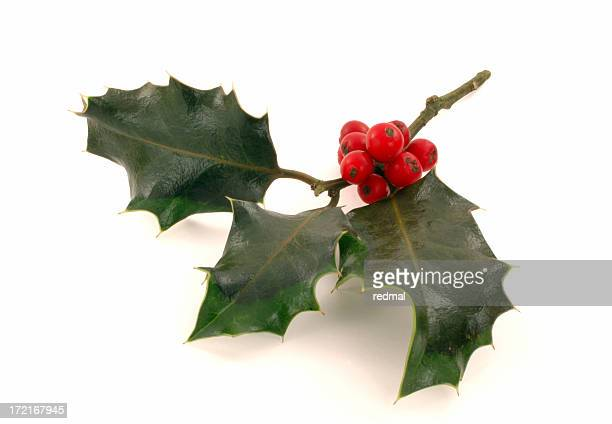 holly2 - holly stock pictures, royalty-free photos & images