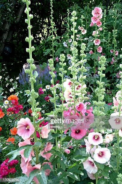 Hollyhock Flower Garden