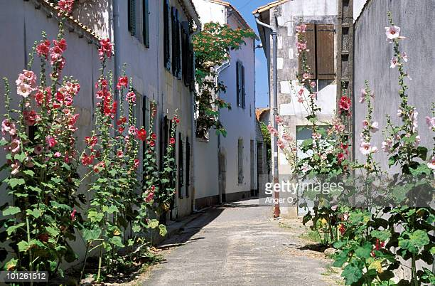 Hollyhocks in alleyway of village, Charente, France