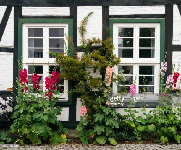 Hollyhocks outside an old cottage in Warnemünde
