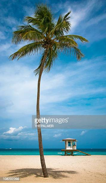 hollywood beach - hollywood florida stock pictures, royalty-free photos & images