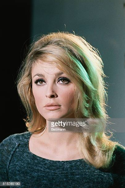Miscellaneous studio publicity photo of actress Sharon Tate who was found slain August 9th in the Bel Air home of her husband Polish movie director...