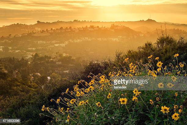 hollywood hills mountain landscape with flowers los angeles - hollywood kalifornien bildbanksfoton och bilder