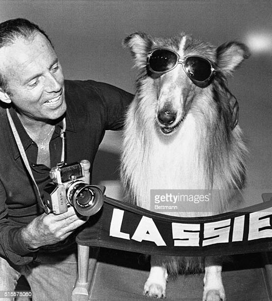 Lassie who begins production shortly in her first full length feature film since 1951 'Lassie My Lassie' literally turns 'Hollywood' as she had a...
